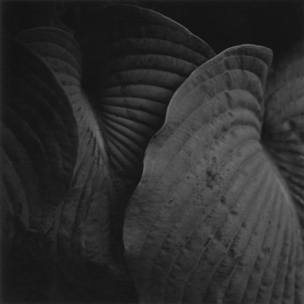 #16 from the series A Deeper Silence by Johnnie Eisen. Included in the exhibition Flora and Fauna: 400 Years of Artists Inspired by Nature at the National Gallery of Canada, 2012.